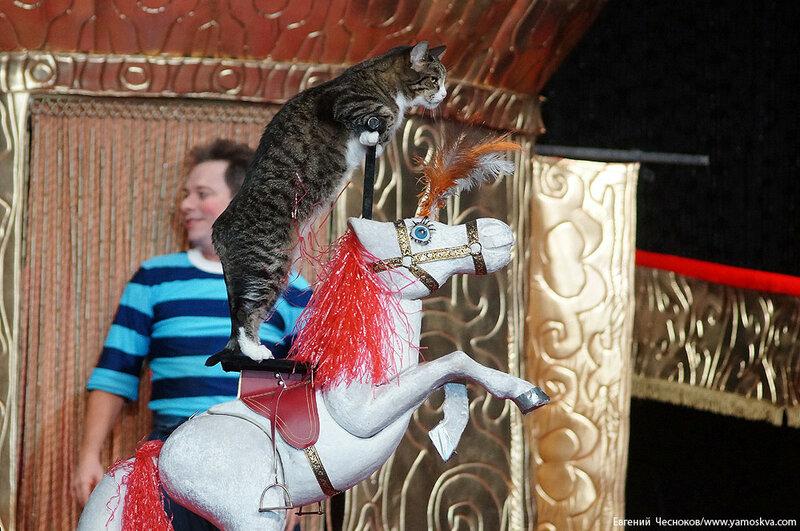 Осень. Театр кошек. ДИНАСТИЯ. 15.10.15.14..jpg