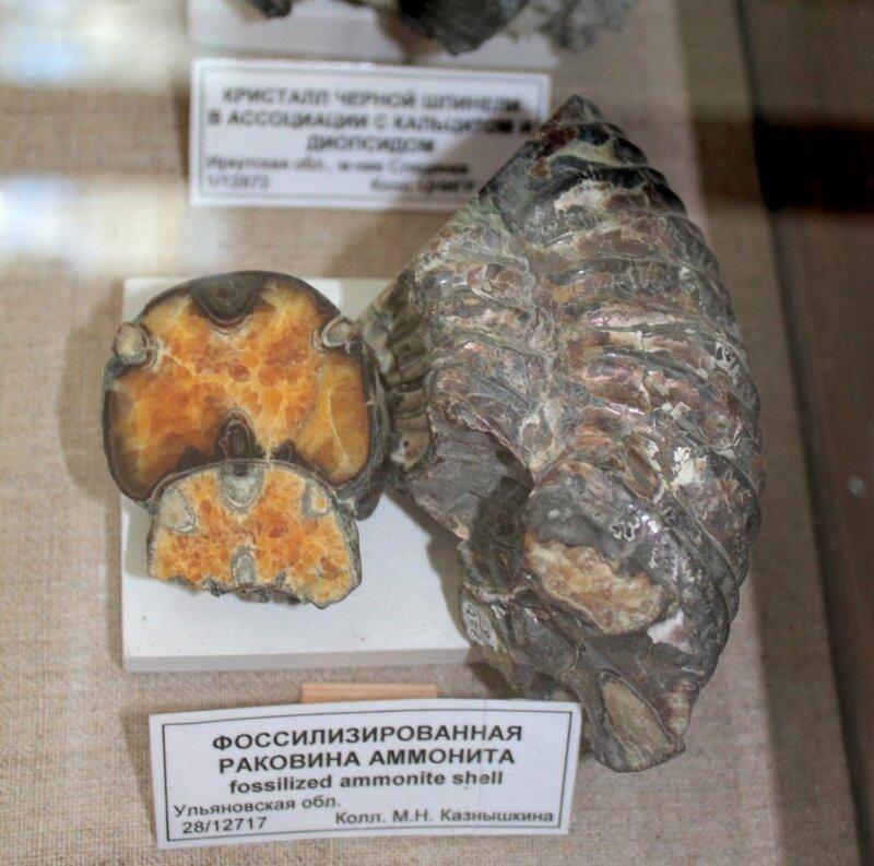 Фоссилизированная раковина аммонита