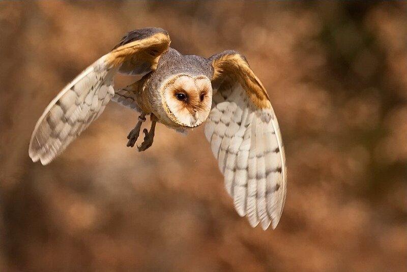 Птицы от фотографа Robert Adamec