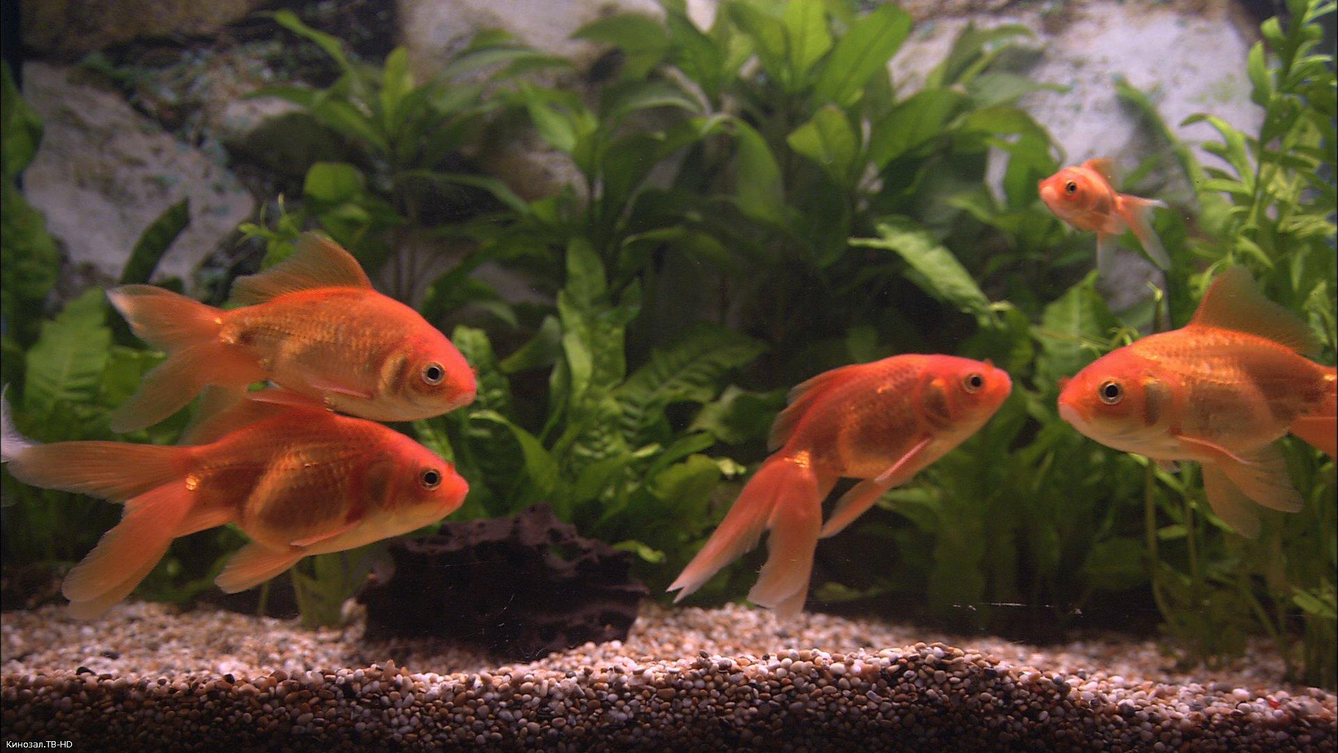 скачать анимированные обои на рабочий стол бесплатно рыбки