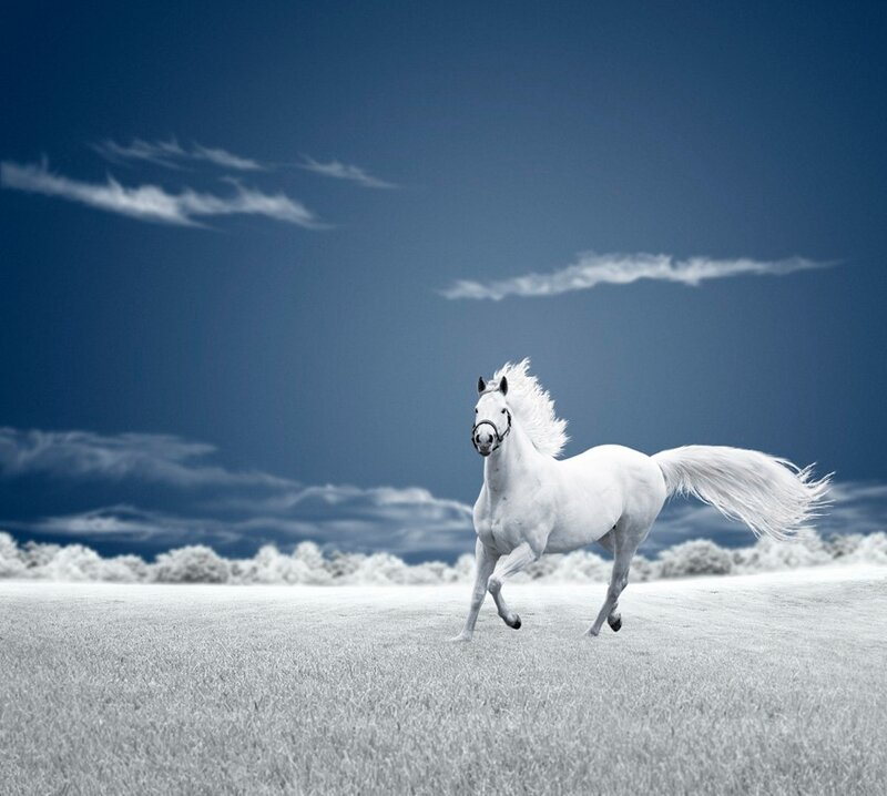 inspirational horses quotes with pictures symphony for love