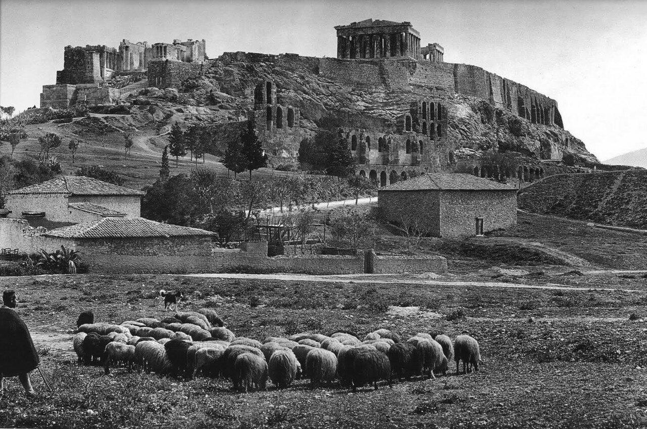 1903. Стадо овец у подножия Акрополя