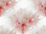 素材辞典 Vol.60 ̈彩りの花編̉
