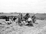 Беженцы в районе Пскова. Июль 1941 г..jpg
