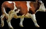 RR_FarmersAlmanac_Element032.png