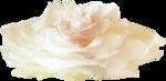 NLD Big Rose.png