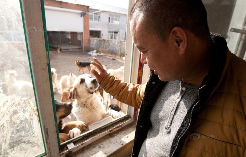 Бывший миллионер залез в долги, но построил приют для сотен собак