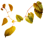GoldenSun_Colors of the autumn_ element 27.png