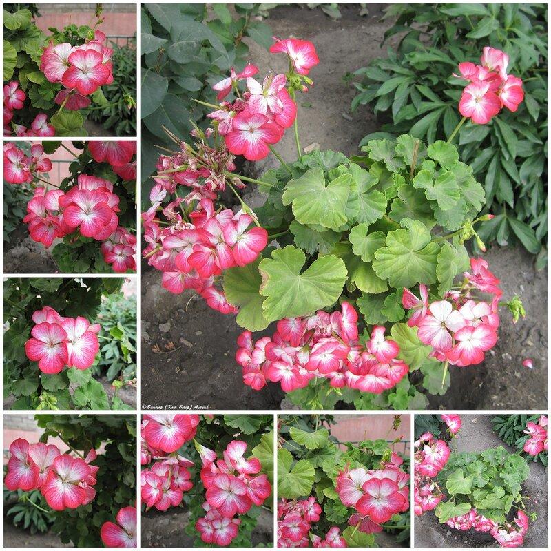 Городские цветы, городские цветы...