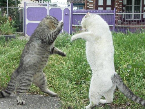 боксёры на ринге