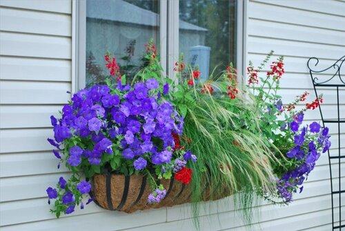 Как украсить окна дома снаружи цветами