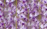 blooms7_1 (5).jpg