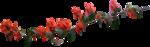florju_tropicalsea_elmt (22).png