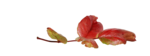 natali_design_apple_leaves2.png