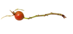 natali_design_apple_twig5.png