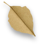 natali_design_apple_leaves12-sh.png