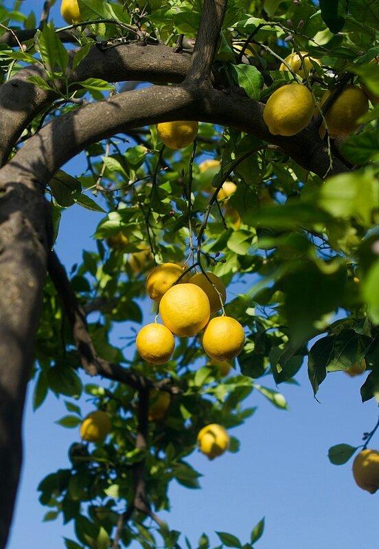 лимончики...