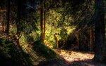 Incase_Forest.jpg