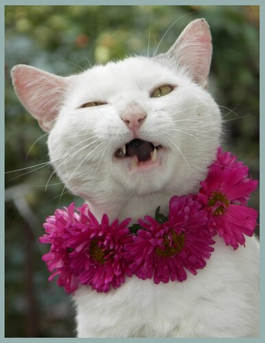 Улыбка Чеширского кота