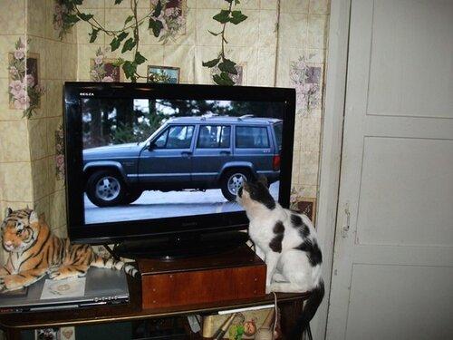 Походит ли эта модель для уважающего себя кота?