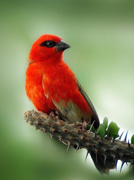 Животные и птицы: Схемы вышивки крестом скачать бесплатно.