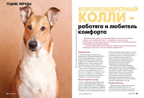 Мир собак 2012 год
