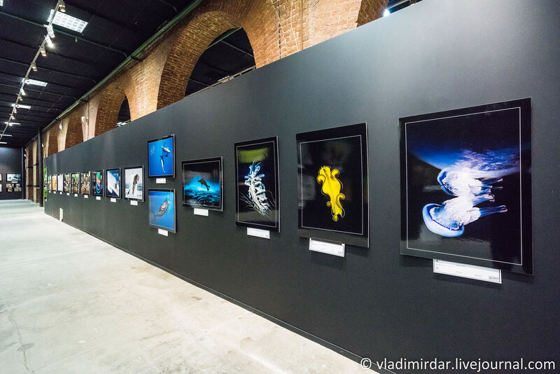 Фестиваль дикой природы Золотая черепаха 2015