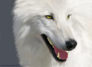 Клипарт волки