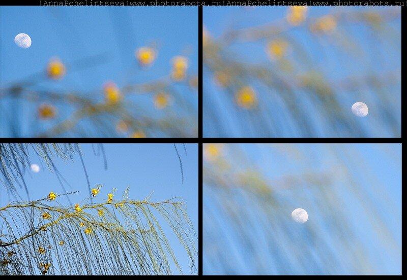 Растения Синая