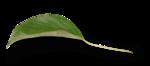 natali_design_apple_leaves16-sh.png