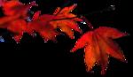 herfstblad 2.png