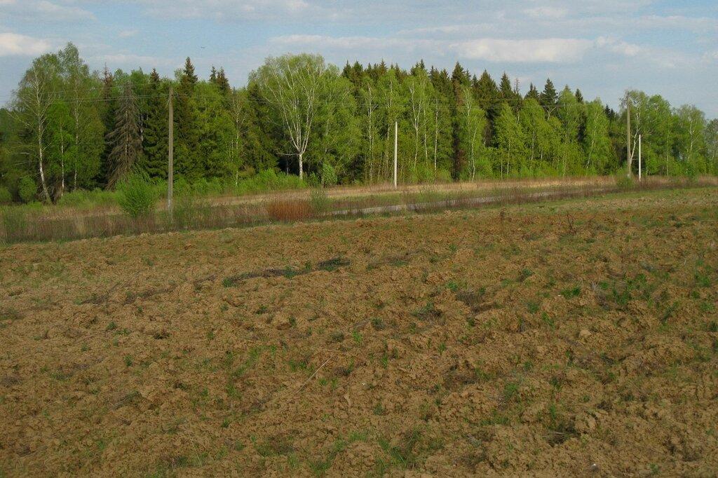 Поле и лес около Долгинихи