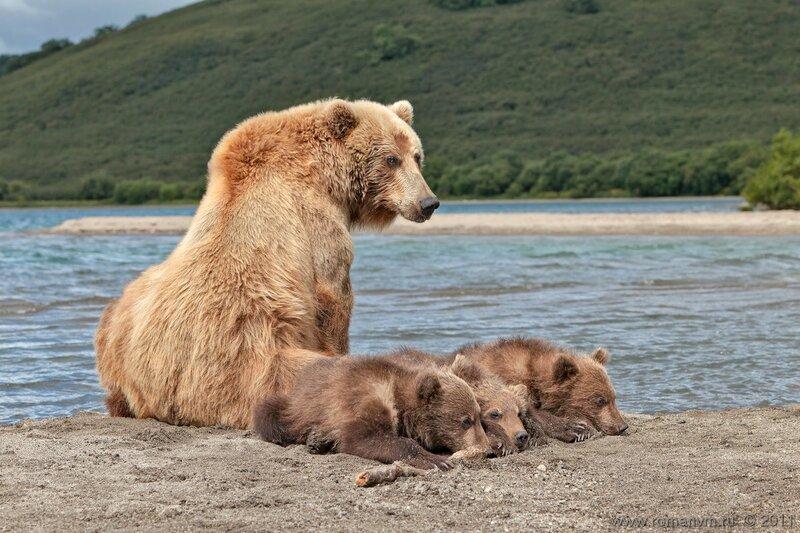 Блондинка с малышами.