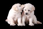 Собачки (91).jpg
