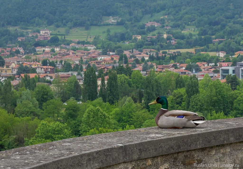 Верхний город Бергамо