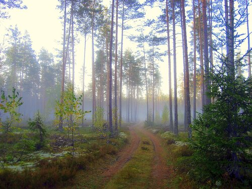 Утро в осеннем лесу