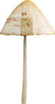 catherinedesigns_R-C23_Mushroom3.png