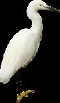 королевство птиц