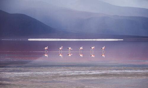 Природное чудо - соляное озеро Боливии