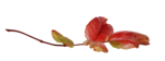natali_design_apple_leaves1.png