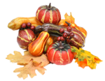 CAJ.SCR.FR KIT AUTUMN GARDEN 23.png