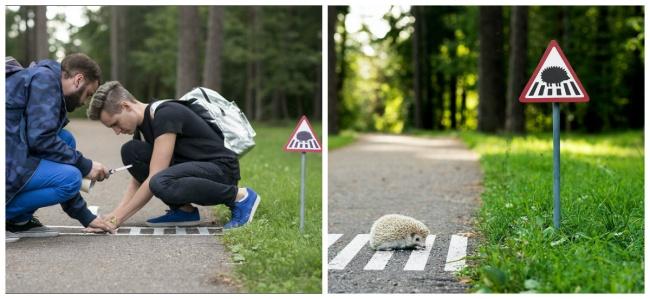 © TINYROADSIGN  Входе экологического проекта вЛитве был также создан дорожный переход для еж