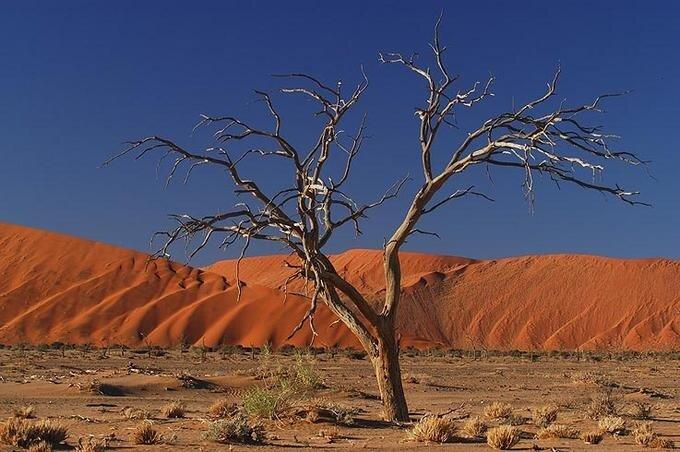 пейзажи пустыни Намиб
