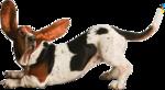 Собачки (129).jpg