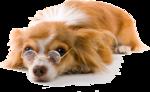 Собачки (162).jpg