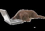 Собачки (164).jpg