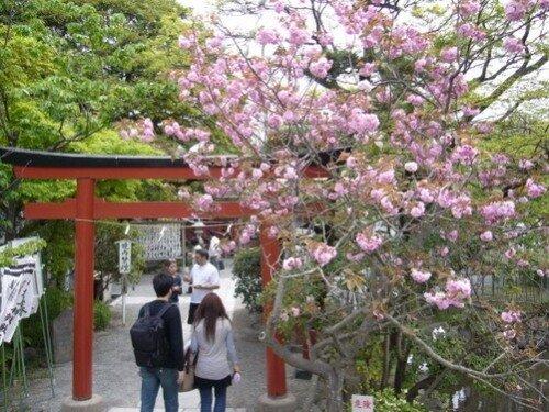 Ритуальные ворота (тории) Цуругаока Хатимангу.