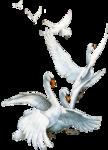 Swanflight.png