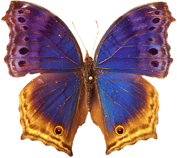"""таблица цветов. схема.  Автор схемы  """"Бабочка """".  Размеры: 190 x 170 крестов.  0. Elena. оригинал.  Картинки."""