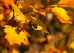 Осенний